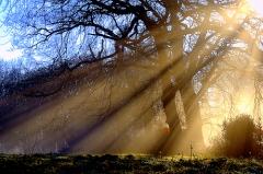 lumen arbres_DFSchool.jpg