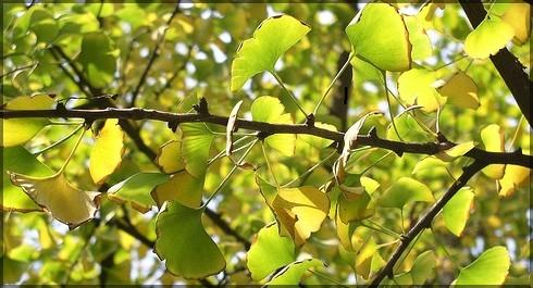 soleil en feuilles.jpg