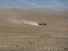 cavaliers au désert.jpeg