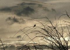 oiseau de pluie.jpg