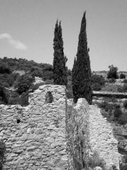 Minerve_cyprès.jpg