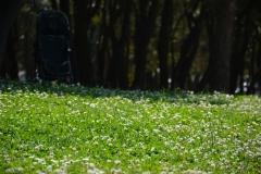 8 La vie au ras de l'herbe - copie.jpg