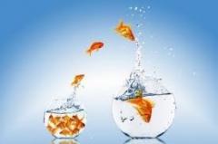 rebondir poissonjpg.jpg