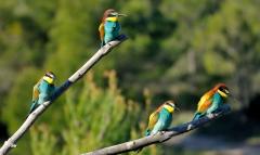 alpe_015alpe 4 oiseaux.JPG