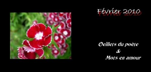 Oeillets_poète_St-Valentin.jpg