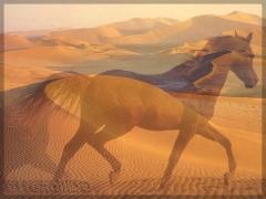 PSarabe_désert.jpg